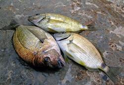 способы рыбалки на черном море