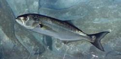 способы ловли рыбы в море